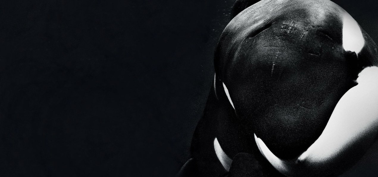 Take 2: Blackfish feature image
